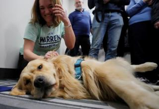 WARREN_DOG_REUTERS_31_1_2020-768x512