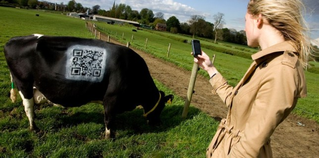 Farm Paints QR Code on Cow