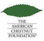 american chestnut fondation featured
