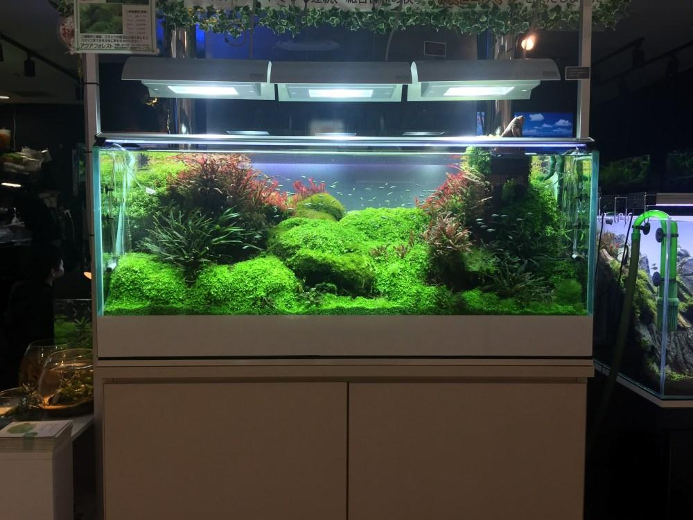 東京都内の水草の種類が豊富なおすすめアクアリウムショップ一覧