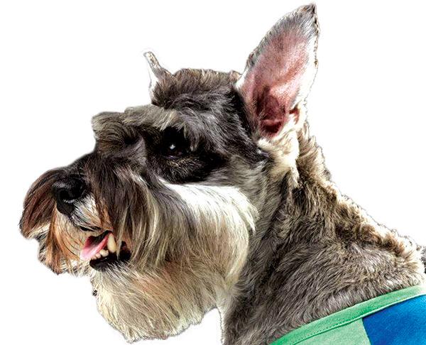 Vacune sus mascotas en Venus & Spa a bajo costo el domingo 6 de agosto