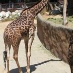 Los Angeles Zoo4