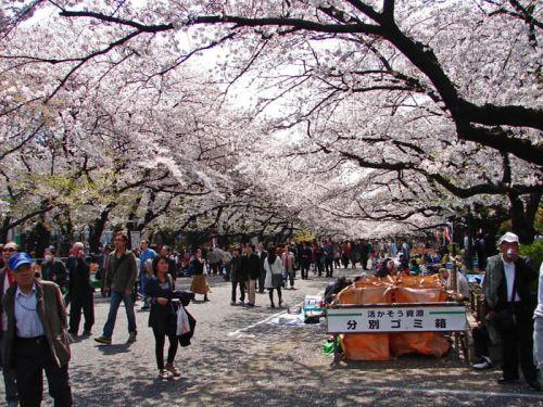 Hanami en el Parque Ueno, uno de los más multitudinarios de Tokio