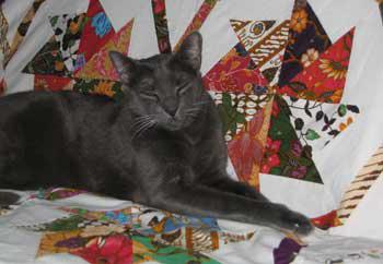 Hector on Batik Fabric Quilt