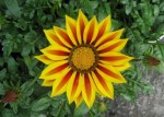 spring-flowers-14