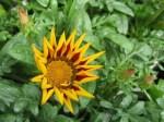 spring-flowers-15