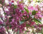 spring-flowers-19
