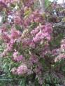 spring-flowers-7