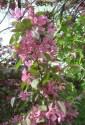 spring-flowers-8