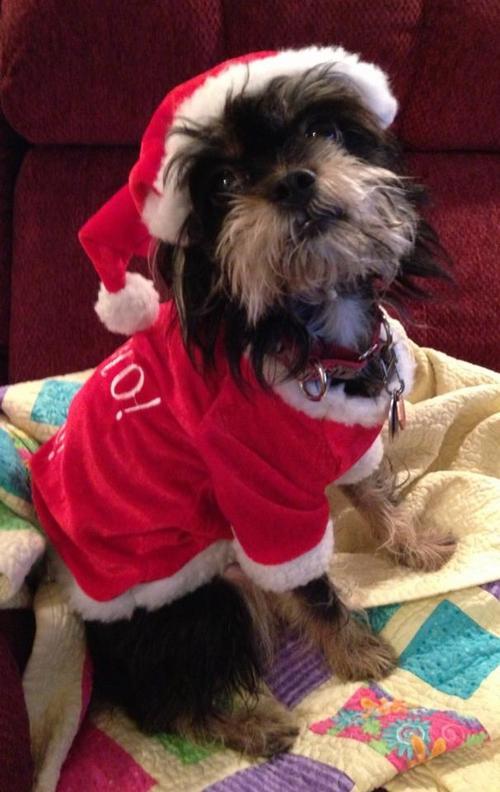 Puppy Santa
