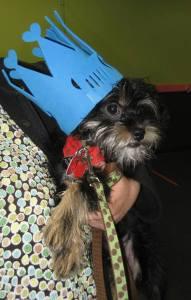 puppy-k-graduate
