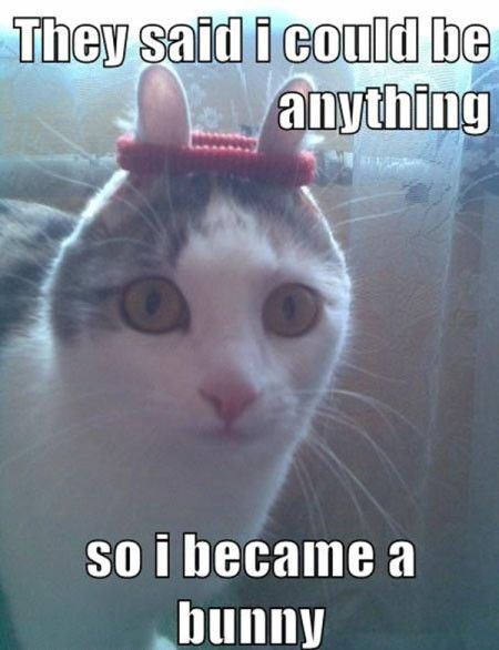 Top 25 Best Funny Animal Memes #Humor