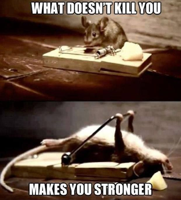 Top 25 Funny Animal Picture Quotes