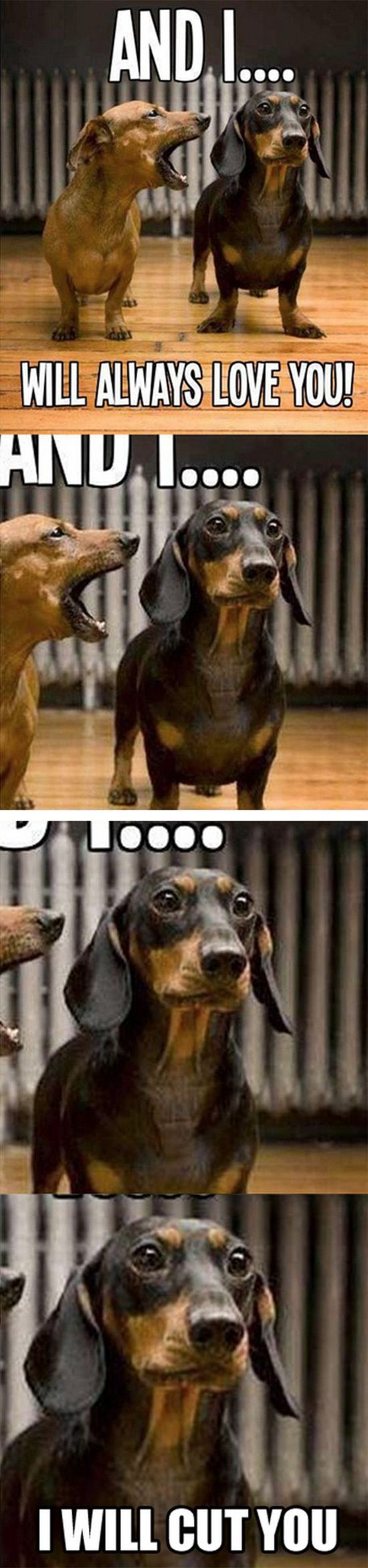 Top 25 Funny Animal Quotes #Funny