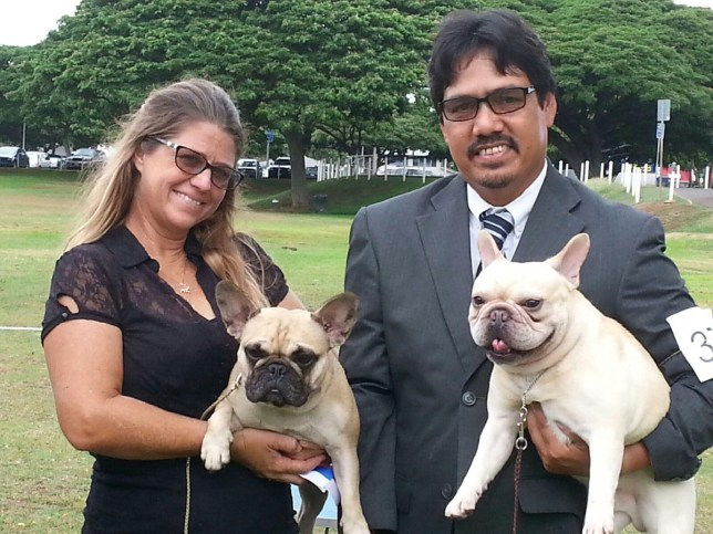 French Bulldogs Hawaii