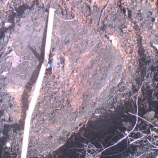 copac taiat cerna 4