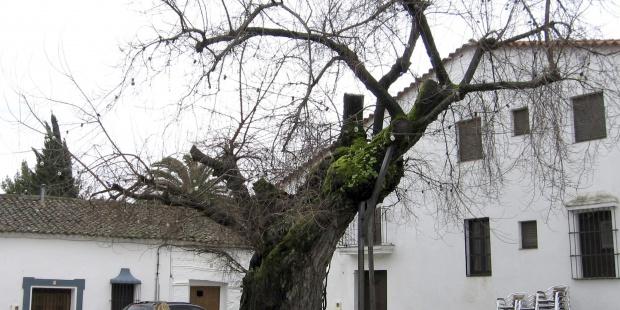 Foto de archivo en el centro de Cortelazor (Huelva). EFE/Fermín Cabanillas