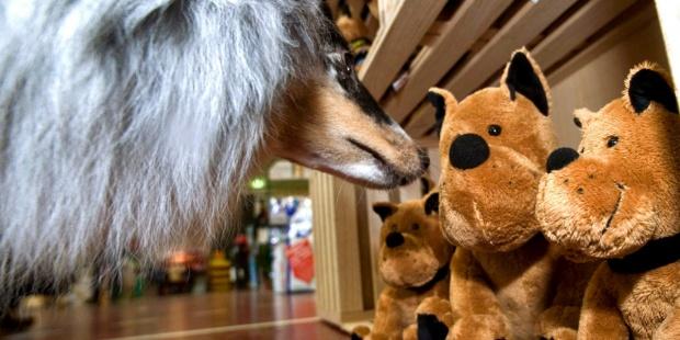Un perro olfatea unos peluches. EFE/Urs Jauda