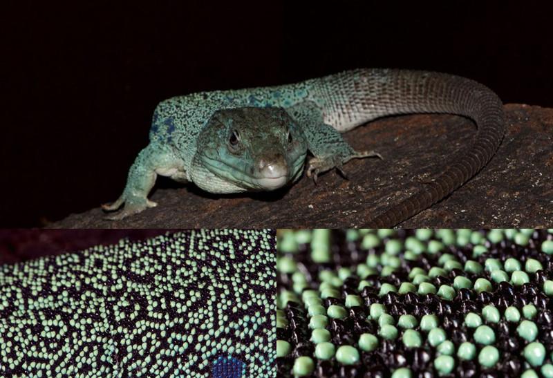 Las-manchas-del-lagarto-evolucionan-segun-un-patron-matematico_image800_