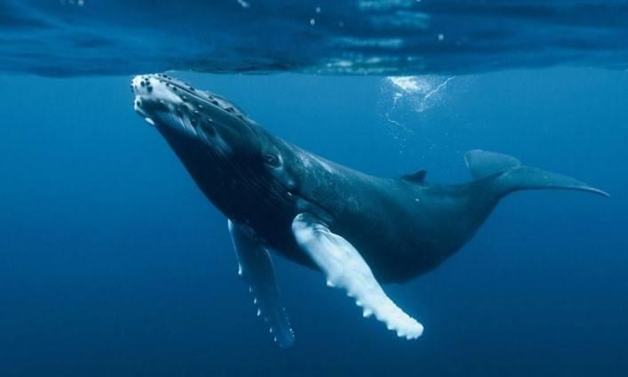 donde-viven-las-ballenas