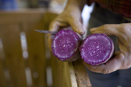 saura, purple, sweet, potato,
