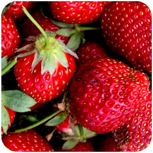 Strawberries in Eastern NC