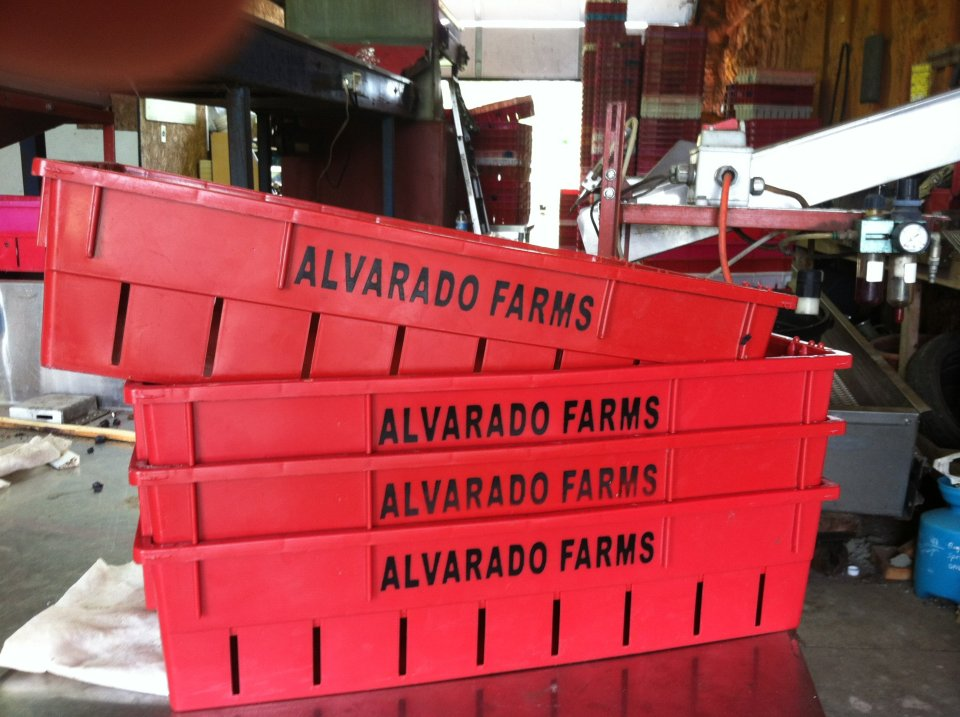 Alvarado_Th