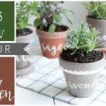 Five Herbs to Grow in Your Kitchen Garden