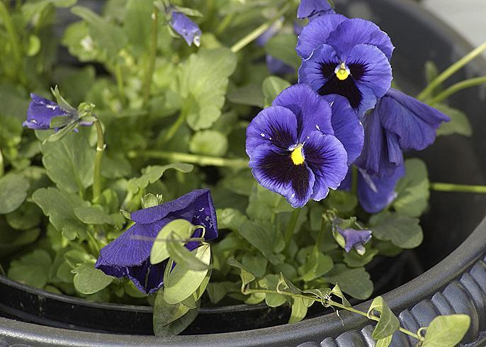 Spring Gardening Tips For Green Thumbs