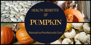 Health Benefits of Pumpkin for Us and Our Pets