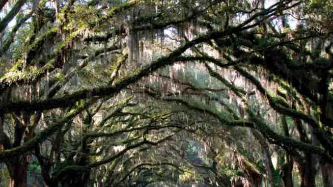Destination: Savannah