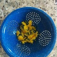 Dandelion sunny petal tea & green leaf smoothie