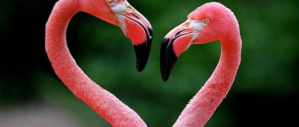 111201 met flamingo new