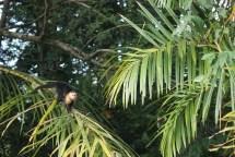 MonkeyTortuguero