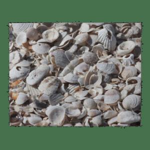shellspuzzle