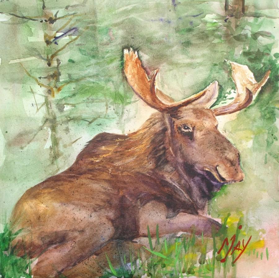 Rande-May-Watercolor-Lazy-Moose