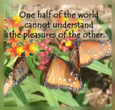 butterflies copy