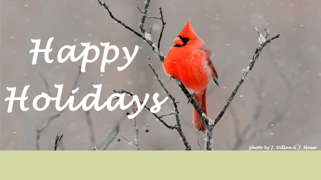 Happy Holidays, Cardinal in tree