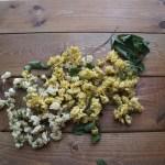 モッコウバラのドライフラワー 黄色と白