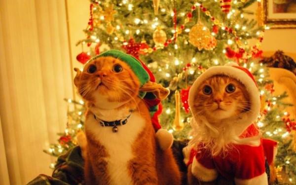 クリスマス0