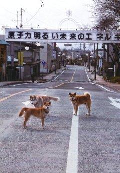 東日本大震災691