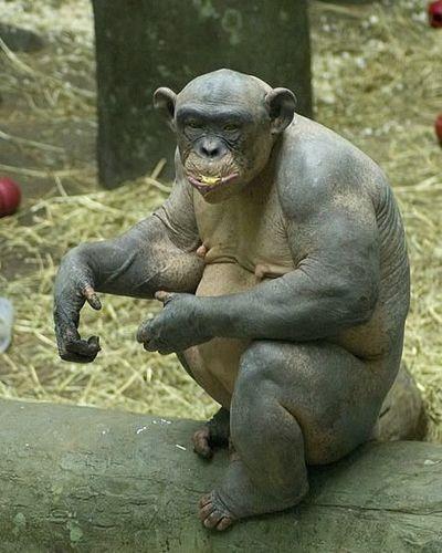 チンパン2