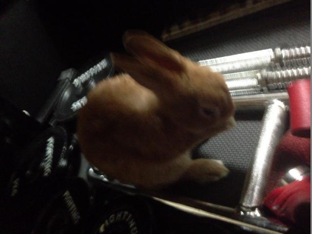 ウサギ122
