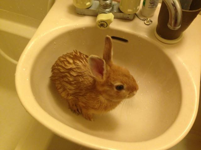 ウサギ201