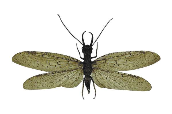 昆虫492
