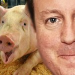 cam and pig