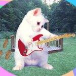 punk_kittens_thumb