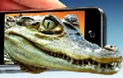 Gatorphone