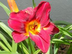 flower_1_1024