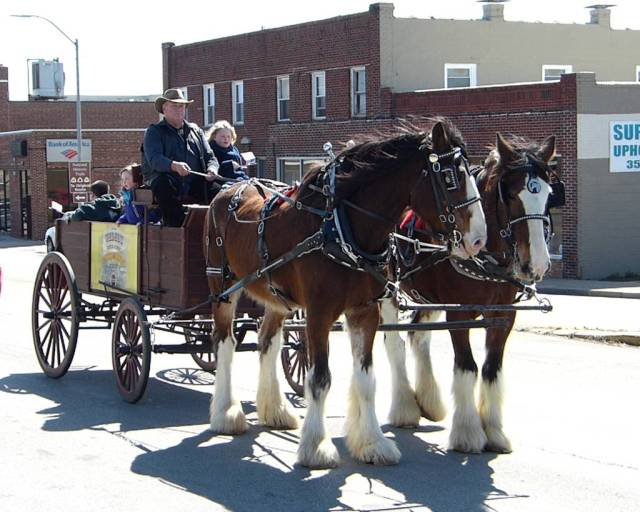 Clydesdales Pulling the Honey Wagon